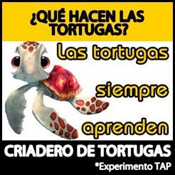 Criadero-Tortugas-TAP